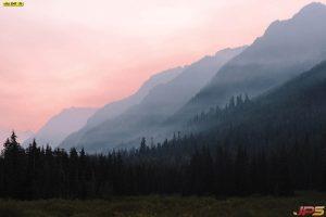 ภาพป่าสนวิวภูเขา