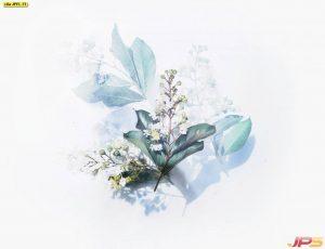 ภาพวาดดอกไม้ ดอกสีขาว